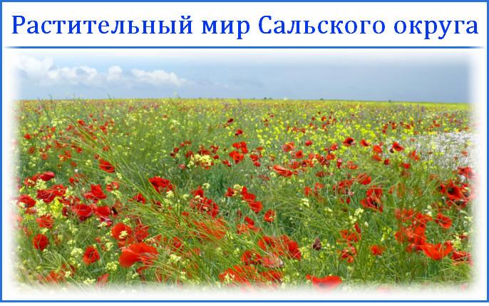 Растительный мир Сальского округа